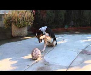 an amazingly well trained dog Funny Video