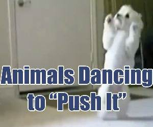 Animals Dancing to Push it Funny Video
