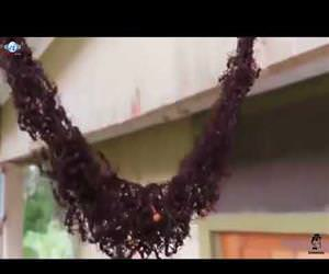 ants building a bridge to attack wasp nest Funny Video