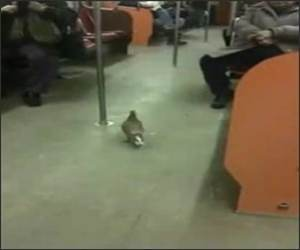Bird Subway Ride Funny Video
