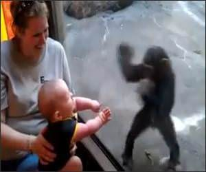 Baby And Chimp Friends Video