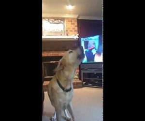 baby and dog howling together Funny Video