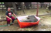 baby elephant bath Funny Video