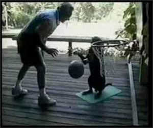 Basketball Playing Dog Funny Video