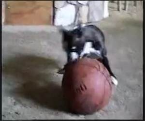 Basketball Dribbling Dog Funny Video