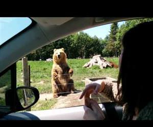 bear makes a great catch Funny Video