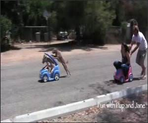 Car Push : Humans Vs Dogs Funny Video