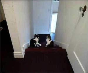 Cat Boxing Match Funny Video