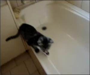 Cat maybe wants Funny Video