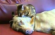 cat dog massage Funny Video