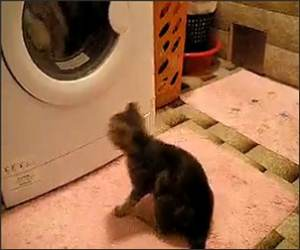 Cat and Washing Machine Funny Video