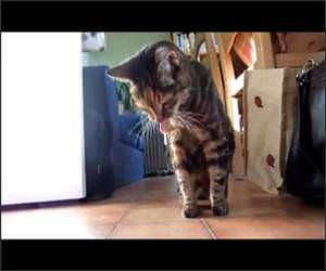 Cat Hairball Techno Funny Video