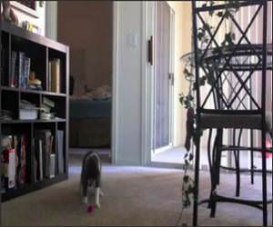 Cat Hates Guitars Funny Video
