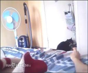 Cat Hates the peace sign Funny Video