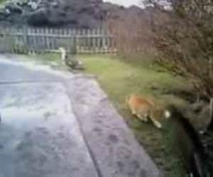 Cat Hunting Ducks Fail Funny Video