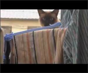 Ninja Cat Funny Video