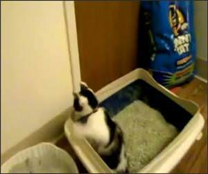 Cat Pees Standing Up Video