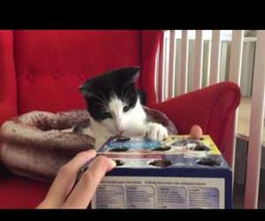 cat playing whack a finger Funny Video