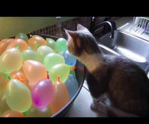 cat popping water balloons Funny Video