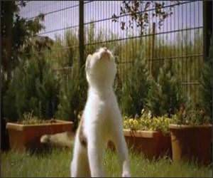 Slow Motion Cat Funny Video