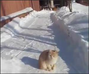 Cat Snow Ninja Funny Video