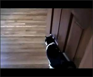 Cat - Tape - Experiments Video
