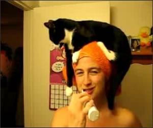 Cat Towel Head Funny Video
