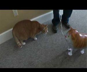 cat vs cat balloon Funny Video