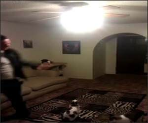 Cat Vs Ceiling Light Funny Video