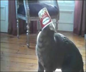 Cat Versus Ice Cream Funny Video