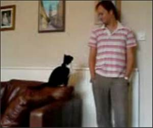 Cat wants attention Funny Video