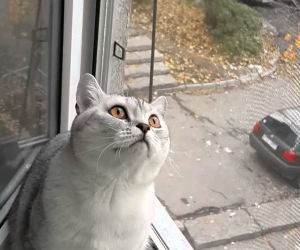 cat will not break concentration Funny Video