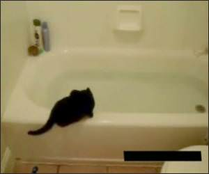 Cat vs bath tub for Soaking tub vs bathtub