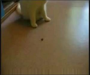 Cat Chasing the Bug Funny Video