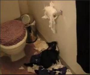 Cat Toilet paper Attack
