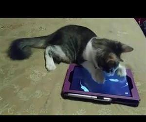 cats at their cutest Funny Video