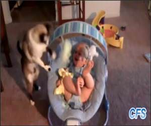 Cats Loving Babies Funny Video