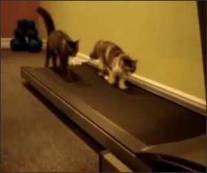 Cats on Treadmill Funny Video