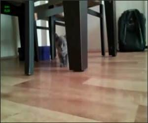 Cats Sneaking up on You Funny Video