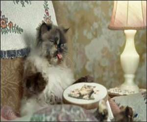Cats with thumbs Funny Video