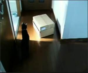 Cat Loves Boxes Funny Video