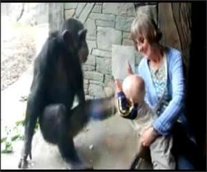 Chimp Hates Baby Funny Video