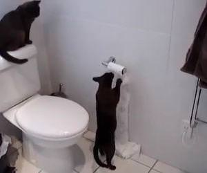 compilation of cats being jerks Funny Video