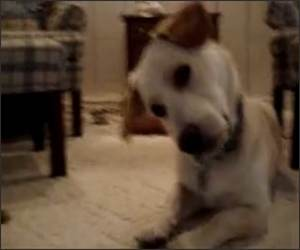 Confused dog watching video Funny Video