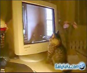Cat Playing with a Monitor