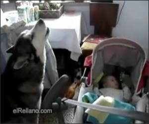 Dog hates when baby cries Funny Video