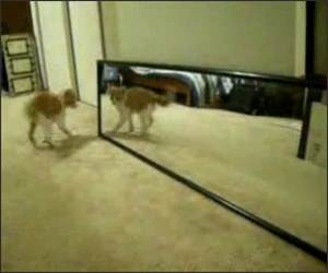 Crazy Cat Fights itself Video