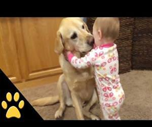 cute dogs and babies compilation Funny Video