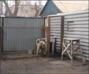 Dancing Russian Dog Funny Video