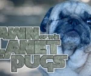 pugs Funny Video